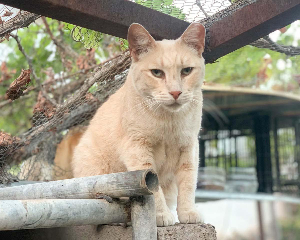 CanariGatos-Tierschutz-Katzen-01