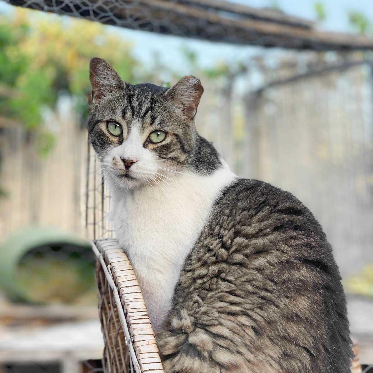 CanariGatos-Tierschutz-Katzen-03